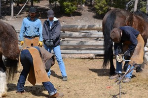 Horse-based Wilderness Training